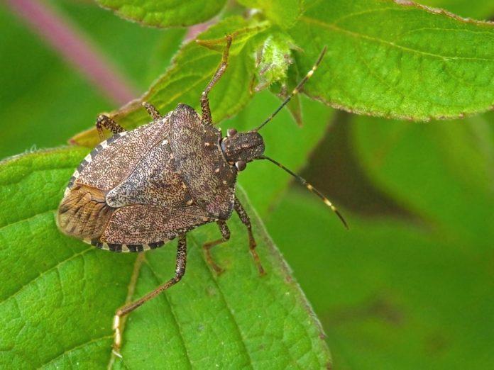 Pests Bug